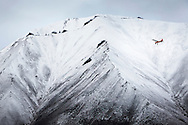 A bush pilot flies his airplane into remote wilderness alongside a towering, snow covered mountain side in Wrangell-St. Elias National Park, Nabesna, Alaska.