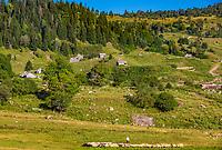 sheppherd and his herd Dabadzveli mountain landscape near Borjomi  landmark of Samtskhe Javakheti region Georgia eastern Europe