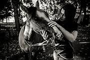 15/04/2017- Danae cabalga caballos corraleros que su padre cria en el sector rural del Cruce Cocule a orillas de Río Bueno.