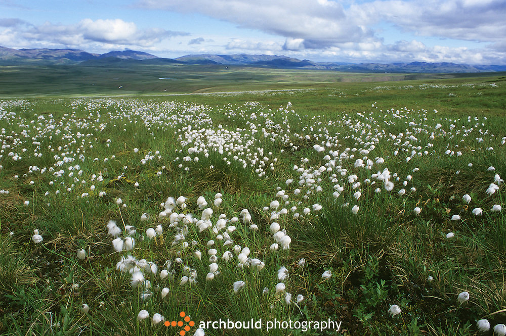 Tundra landscape in Northern Yukon