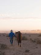 Ranch owner leading his horse at sunrise. Flinders Ranges, South Australia, Australia