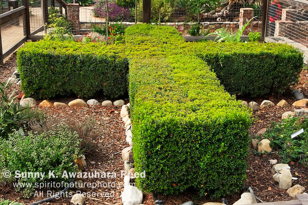 cross shaped plants