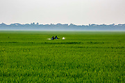 Two crop sprayers walk through a paddy field spraying pesticides on the 2nd of October 2018 in Satkhira District, Bangladesh. Recently salt resistant paddy has been developed offering hope to farmers who's crop is affected by climate change.  Satkhira is a district in southwestern Bangladesh and is part of Khulna Division. It lies along the border with West Bengal, India. It is on the bank of the Arpangachhia River.
