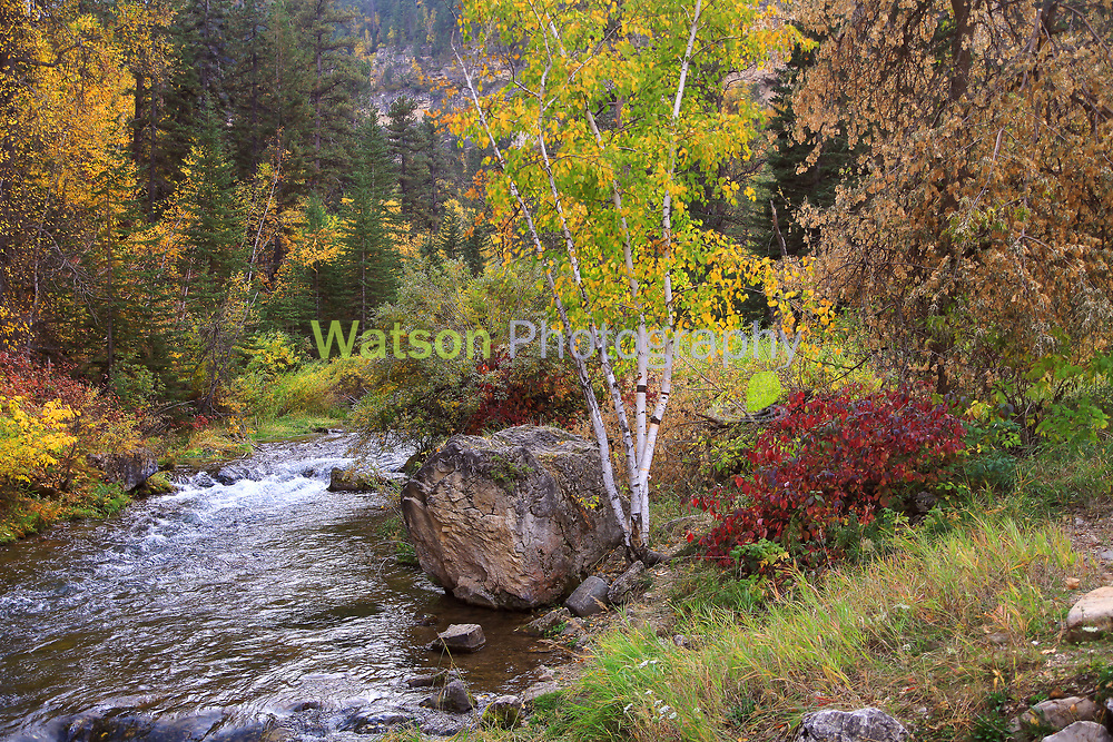 Autumn Colors about to peak in Spearfish Canyon show up like a rainbow of colors near the Spearfish Creek.