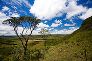 Alto Paraiso de Goias_GO, Brasil...Arbusto no Parque Nacional da Chapada dos Veadeiros...The shurb in the Parque Nacional da Chapada dos Veadeiros...Foto: JOAO MARCOS ROSA / NITRO..