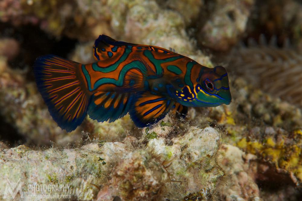Dive Spot: Divers Lodge House Reef
