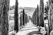 Black and white photographic art of trees lining a country road in a vineyard in California wine country.