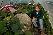 David Thomas,42, spends his days producing perfectly proportioned vegetables for supermarkets but in the evening he devotes himself to his hobby growing outsized vegetables. Giant vegetable growing is not a hobby for the faint hearted. The growers have to tend to the vegetables almost every day (including Christmas) spending up to 80 hours a week, tending, nurturing, growing and spending thousands on fertilisers, electricity and green houses. The reward is to be crowned world record holder of largest, longest or heaviest in class, cabbages weighing in at 100lb, carrots stretching 19 ft and pumpkins tipping the scales at 800lb. It's a competitive business though and global; some times the record may stand for only hours before a fellow competitor, somewhere,  knocks a grower off the coveted spot.