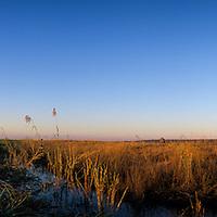 Africa. Botswana, Chobe National Park, Bull Elephant (Loxodonta africana) stands  along banks of Chobe River at sunset