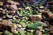 Rocks on the treacherous shoreline of Great Saltee, one of the Saltee Islands, off the coast of Co. Wexford, Ireland. There's no natural harbour on the island. This coast, and the coast of South Wexford in general, was known as The Graveyard of a Thousand Ships, due to the hundreds of ships that met their end here. The geology of the Saltee Islands pre-cambrian bedrock - granite and granitoid gneiss - shows them to have some of the oldest rock in Ireland