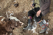 Yak attacked and killed by wolves..Abdul Qayoom , brother of Haji Bootoo Boi, going to gather the family yaks. He uses a slingshot to round up the animals..The Kyrgyz settlement of Tchelab, near Chaqmaqtin lake, Haji Bootoo Boi's camp...Trekking through the high altitude plateau of the Little Pamir mountains, where the Afghan Kyrgyz community live all year, on the borders of China, Tajikistan and Pakistan.
