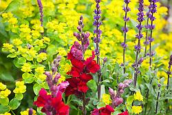 Antirrhinum majus 'Liberty Crimson' (Snapdragon) with Salvia nemorosa 'Ostfriesland' syn. 'East Friesland' (Balkan clary) and Euphorbia oblongata