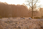 Redgrave and Lopham Fen at Sunrise - Suffolk Wildlife Trust