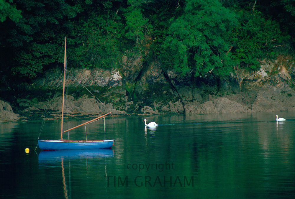 Swans and a boat on the Helford River in Cornwall, England