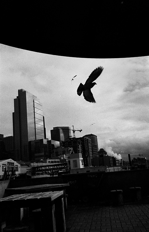 Birds fly along the Seattle skyline from Victor Steinbrueck Park next to the famous Pike Place Market. This park is a favorite hangout for homeless men and women, and is a rampant spot for drug sales.