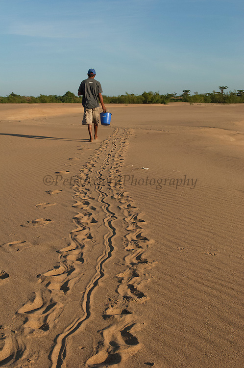 Giant River Turtle Tracks (Podocnemis expansa) being followed by Danielson LLorente<br /> CITES II VULNERABLE.<br /> Orinoco River, 110 Km north of Puerto Ayacucho. Apure Province, VENEZUELA. South America. <br /> L average 90cm, Wgt 30-45kg. Largest fresh water river turtle in South America. Eggs round & 42mm. 90-100 per clutch. 6-8 weeks incubation. Females come ashore to sun themselves for several days before laying to ......  They lay when the river is at its lowest. They are Herbacious and live in white or black water rivers moving into flooded forests of the Amazon during the wet season to feed on fallen seeds.<br /> HABITAT: exposed.RANGE: Amazonia, Llanos & Orinoco of Colombia, Venezuela, Brazil, Guianas, Ecuador, Peru & Bolivia.<br /> Monitored from Base Camp of the Protected area of the Giant River Turtle (& Podocnemis unifilis). (Refugio de Fauna Sylvestre, Zona de Protecion de Tortuga Arrau, RFSZPTA)<br /> Ministery of Environment Camp which works in conjuction with the National Guard (Guardia Nacional) who help enforce wildlife laws and offer security to camp staff. From here the ministery co-ordinate with other local communities along the river to hand-rear turtles for the first year of their life and then release them. The ministery pays a salary to one person in each community that participates in the project as well as providing all food etc. The turtles are protected by law and there is also a ban on the use of fishing nets in the general area. During the egg laying season staff sleep on the nesting beaches to monitor the nests.  All nests layed on low lying ground are dug up and relocated to an area not likely to flood. They are then surrounded by a net to catch all hatchlings who will then spend the first year of their life in captivity to increase their chances of survival. Biometric data is taken from any female they find that has layed eggs and is returning to the river.