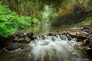 Oceania, New Zealand, Aotearoa, North Island, Hot Creek near Waiotapu