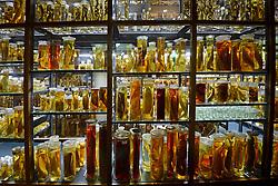 15.03.2016, Museum fuer Naturkunde, Berlin, GER, Naturkundemuseum Berlin, im Bild Vitrinen mit historischen Exponaten der sogenannten Nasssammlung // Exhibits in the Natural History Museum Museum fuer Naturkunde in Berlin, Germany on 2016/03/15. EXPA Pictures © 2016, PhotoCredit: EXPA/ Eibner-Pressefoto/ Schulz<br /> <br /> *****ATTENTION - OUT of GER*****