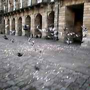 Pigeons in Obradoiro Square, Santiago de Compostela, Galicia . Spain . The WAY OF SAINT JAMES or CAMINO DE SANTIAGO following the French Route, between Saint Jean Pied de Port and Santiago de Compostela in Galicia, SPAIN. Tradition says that the body and head of St. James, after his execution circa. 44 AD, was taken by boat from Jerusalem to Santiago de Compostela. The Cathedral built to keep the remains has long been regarded as important as Rome and Jerusalem in terms of Christian religious significance, a site worthy to be a pilgrimage destination for over a thousand years. In addition to people undertaking a religious pilgrimage, there are many travellers and hikers who nowadays walk the route for non-religious reasons: travel, sport, or simply the challenge of weeks of walking in a foreign land. In Spain there are many different paths to reach Santiago. The three main ones are the French, the Silver and the Coastal or Northern Way. The pilgrimage was named one of UNESCO's World Heritage Sites in 1993. When there is a Holy Compostellan Year (whenever July 25 falls on a Sunday; the next will be 2010) the Galician government's Xacobeo tourism campaign is unleashed once more. Last Compostellan year was 2004 and the number of pilgrims increased to almost 200.000 people.