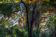 Sunset along the Coastal Heaphy Track. Lush and dense Nikau stands, mixed with large coastal forest trees, set against the setting sun, right at the edge of the Tasman Sea.