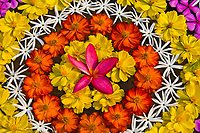 Floating floral arrangement, Four Seasons Resort Chiang Mai, Mae Rim district, near Chiang Mai, Northern Thailand