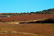Domaine Jean Louis Denois. Limoux. Languedoc. France. Europe. Vineyard.