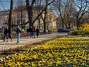 Wiosna na krakowskich Plantach, w glębi widoczny budynek Pałacu Sztuki.<br /> Spring in the Cracow Planty, Poland