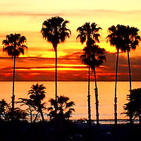 USA, California, San Diego. Palm Tree Sunset, Cardiff by the Sea.