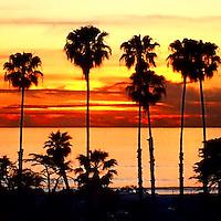 USA, California, San Diego. Palm Tree Sunset, Cardiff by the Sea.