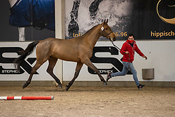 020, Suives Moi STB<br /> BWP Hengstenkeuring 2021<br /> © Hippo Foto - Dirk Caremans<br />  11/01/2021