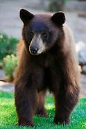 Lake Tahoe Wildlife