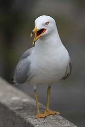 Bird. (Photo by Vid Ponikvar / Sportida)