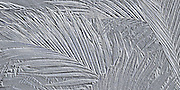 Design of Tiger Palm - etched metallic simulation Photo art images with 3D, bas relief effect and simulated metallic photos