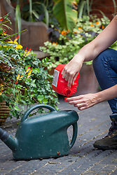 Feeding container plants - measuring out tomato feed into a watering can