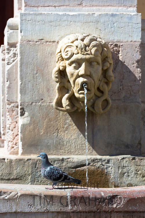 Pigeon at water fountain in Plaza Basilica San Isidoro on Way of St James pilgrim route Camino de Santiago in Leon, Spain