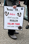 Protest against the proposed cull of badgers June 1st 2013. A demonstrator holds a placard saying 'Bovine TB. Badgers didn't cause the problem, killing them won't solve it'.