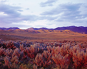 Sagebrush leading toward foothills of the Gravelly Range above the Ruby River Valley, Madison County, Montana.