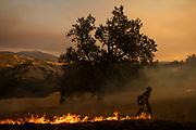 HEALDSBURG, CA - OCTOBER 26: A firefighter sets a back fire along a hillside during firefighting operations to battle the Kincade Fire in Healdsburg, California on October 26, 2019.