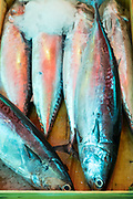 Fresh oily fish chilled with ice on sale at the famous Ballero street market for fresh food in Palermo, Sicily, Italy
