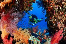 Dendronephthya hemprichi, Buntes Korallenriff mit Schleierbäumchen Weichkorallen und Taucher, Coral Reff with Hemprichs Red Soft Tree Coral and scuba diver, Wadi Gimal Nationalpark, Rotes Meer, Ägytpen, Red Sea, Egypt, MR Yes