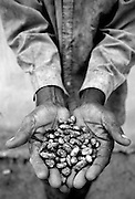 Cocoa farm, Central Region.<br /> <br /> Farmer is Lawson Lanquaye Mensah, 70.<br /> <br /> Farms cocoa since 1998, his father was also a cocoa farmer in the Eastern Region.<br /> <br /> A bag of 65kg of cocoa beans sells for 572,000 cedis, the profit after paying farm workers, etc, is about 150k.