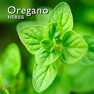 Oregano Pictures | Oregano Food Photos Images & Fotos
