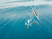 FRENCH POLYNESIA - 15 September 2017 : Aerial view of three locals paddling with dolphins in sea in French Polynesia.
