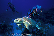 loggerhead sea turtle, <br /> Caretta caretta, and scuba divers<br /> near Mount Olympus, Little Bahama Bank<br /> Bahamas, ( Western Atlantic Ocean )