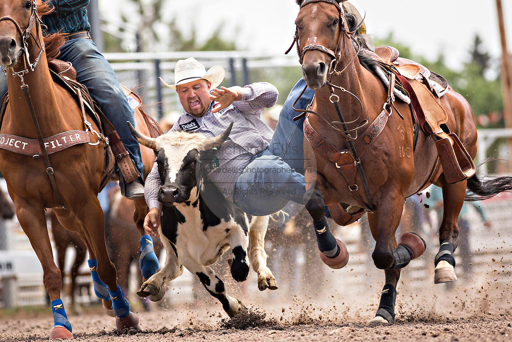 Steer Wrestler Tooter Silver of Quitman, Arkansas grabs the horns of a steer at the Cheyenne Frontier Days rodeo at Frontier Park Arena July 24, 2015 in Cheyenne, Wyoming. Frontier Days celebrates the cowboy traditions of the west with a rodeo, parade and fair.