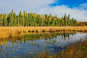 Wetland adjacent Nabob Lake on Witch Lake Road. <br />Near Kenora<br />Ontario<br />Canada