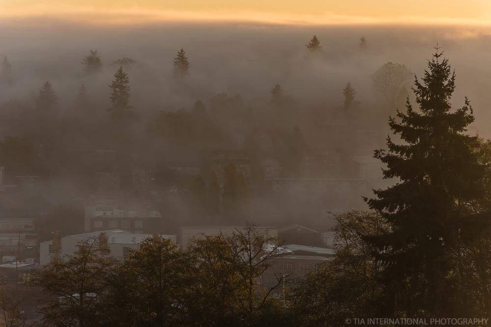 Foggy Autumn (Queen Anne Hill)
