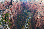 View into the Virgin River Canyon from Angel's Landing in Zion National Park, Springdale, Utah