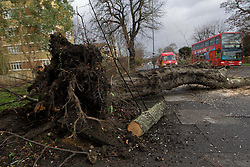 © Licensed to London News Pictures. 05/01/2012, London, UK.  A tree blown down by high wind lies across the pavement in Anerley, south London as windy weather continue to hit UK, Thursday, Jan. 5, 2012. Photo credit : Sang Tan/LNP
