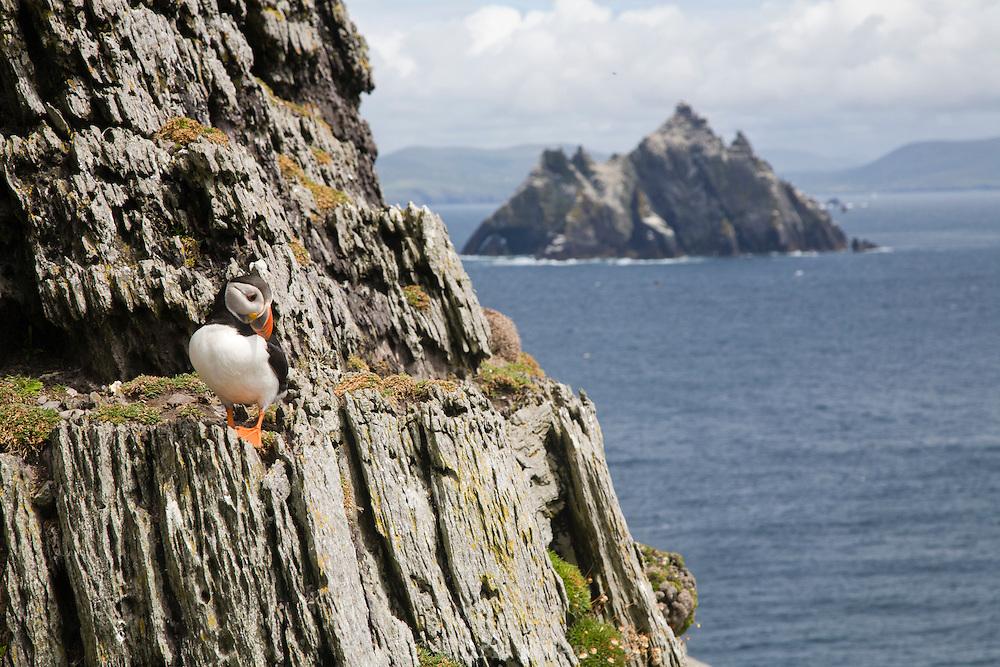 Puffin on cliff of Skellig Michael,  (Little Skellig, background), Skellig Islands, Ireland